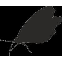 Бабочка 31