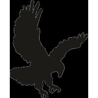 Орел 5