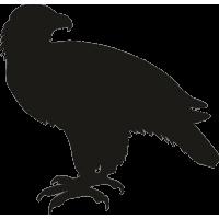 Орел 19