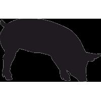 Северокавказская Свинья