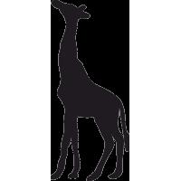 Жираф с поднятой головой