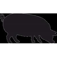Свинья Ландрас 3