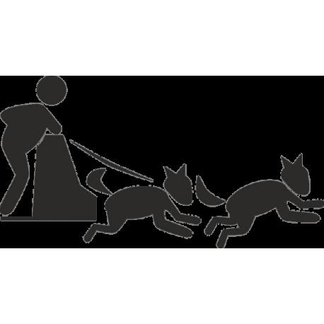 Человек в собачьей упряжке
