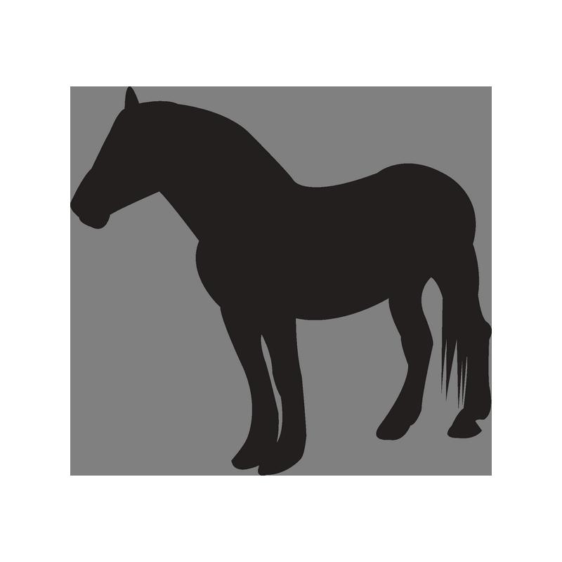 Картинки след лошади