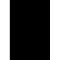 Череп 46