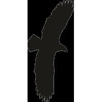 Орел 2