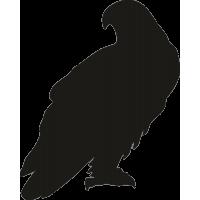 Орел 6