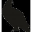 Орел 16