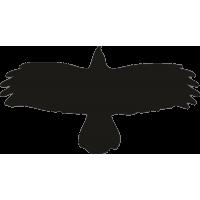 Орел 20