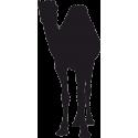 Одногорбый Верблюд 2