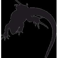 Ящерица 2