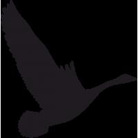Птица в Полете 2