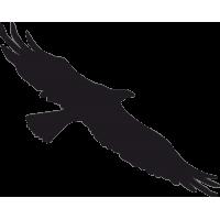 Птица в Полете 5