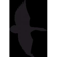 Птица в Полете 8