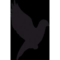 Птица в Полете 9