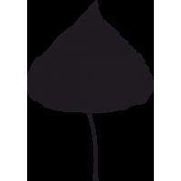 Листья Тополя 1