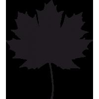 Листья Клена 6