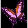 Бабочка 51