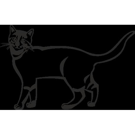 Кот стоит с вытянутым Хвостом