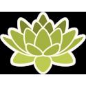 Зеленый цветок лотоса