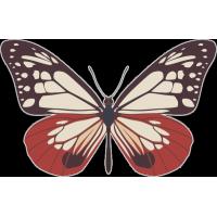 Бабочка 161
