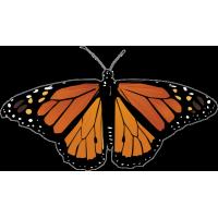 Бабочка черно-оранжевого цвета