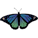 Бабочка черно-сине-зеленого цвета
