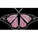 Бабочка черно-розового  цвета