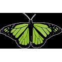 Бабочка черно-зеленого цвета