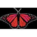 Бабочка черно-красно-малинового цвета
