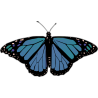 Бабочка чёрно-сине-зелёного цвета