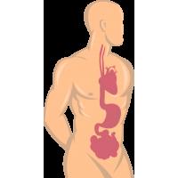 Человек с нарисованными внутренними органами