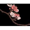 Ветка деревья с цветами