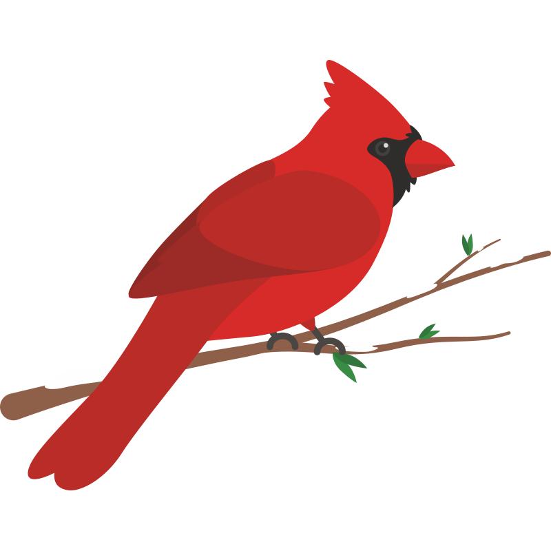 Картинки для детей птичка сидит на ветке, нарисовать открытке день