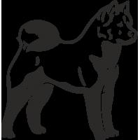 Собака Акита Ину