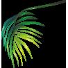 Листок с пальмы