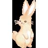 Заяц акварель