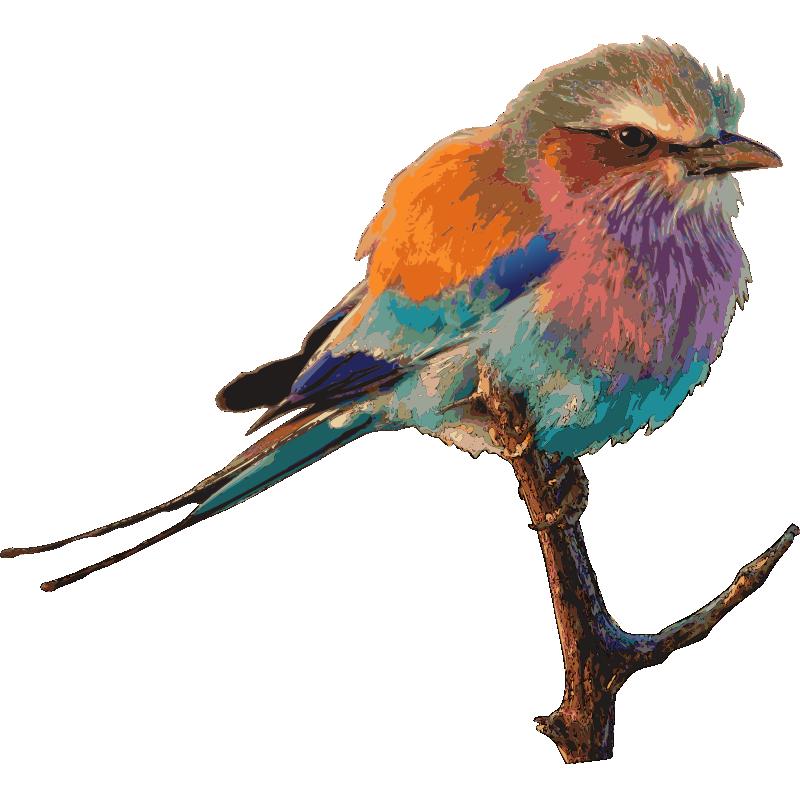 картинки иллюстрации птиц действительности, появление